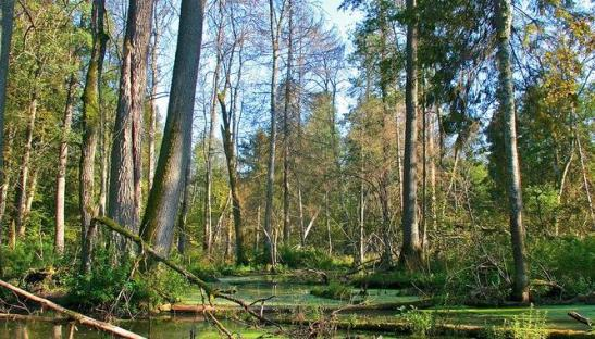 Polish wild life in Bialowieza