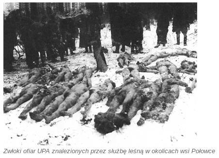 Zwloki ofiar UPA w Polowce