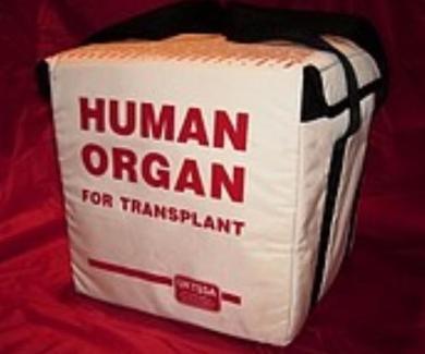 Bag with human organ