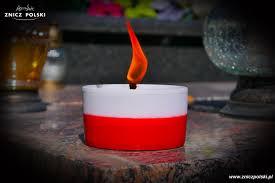 Znicz bialo-czerwony